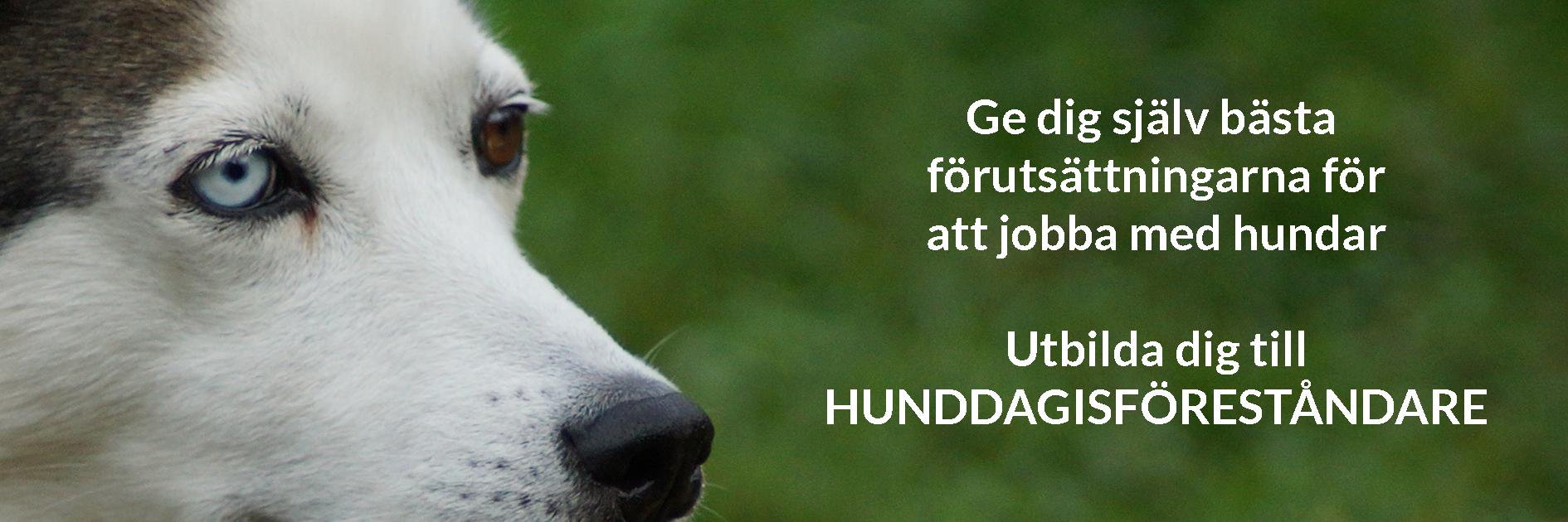 Hunddagisföreståndarutbildning